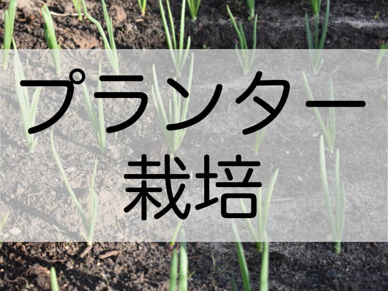 葉ネギ(万能ねぎ・九条ネギ)のプランター栽培に関する記事のバナーです。