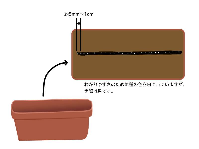 葉ネギ(万能ねぎ・九条ネギ)のプランター栽培における種まきを示したイラストです。5mm〜1cm間隔で条播きします。