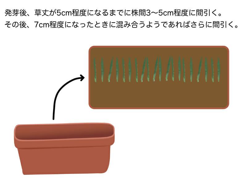 葉ネギ(万能ねぎ・九条ネギ)のプランター栽培における間引きの作業を示したイラストです。株間3cm〜5cmになるように間引きます。