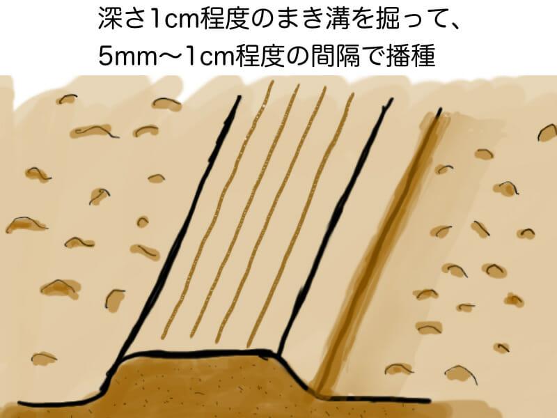 葉ネギ(九条ネギ・万能ねぎ)、根深ネギ(長ネギ)の育苗畑での播種方法を示した画像です。
