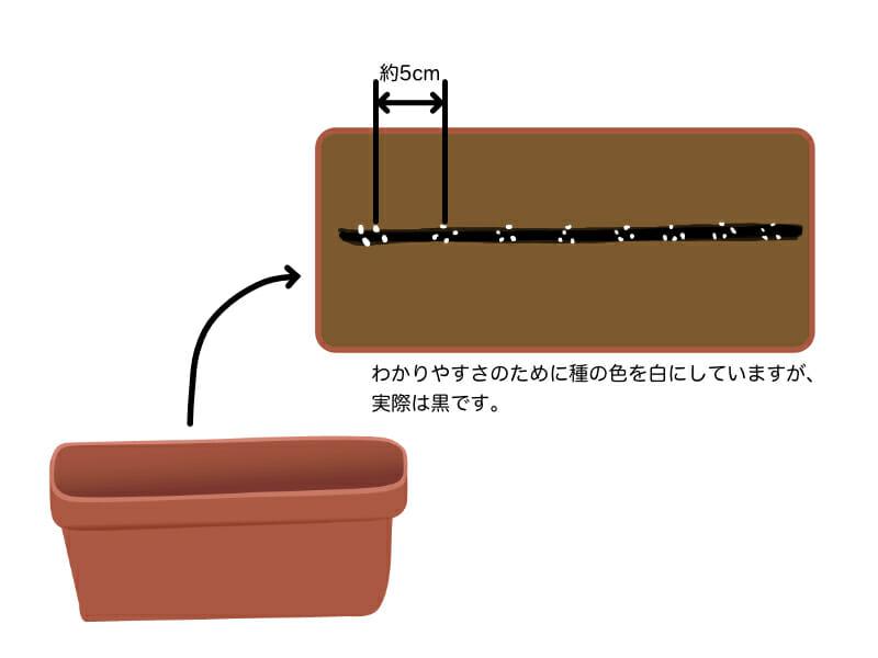 根深ネギのプランター栽培における種まき(播種)の方法を示したイラストです。一箇所に3粒〜4粒程度、5cm程度間隔を空けて播種します。