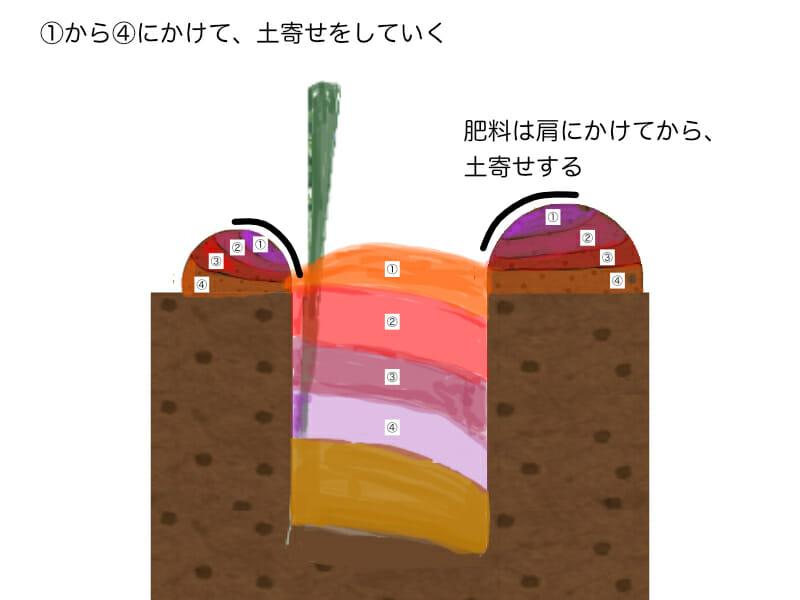 ネギ栽培の土寄せの方法を示した画像です。複数回に渡って土寄せを行うため、溝の横の山を少しずつ崩していきます。同時に追肥もしていきます。