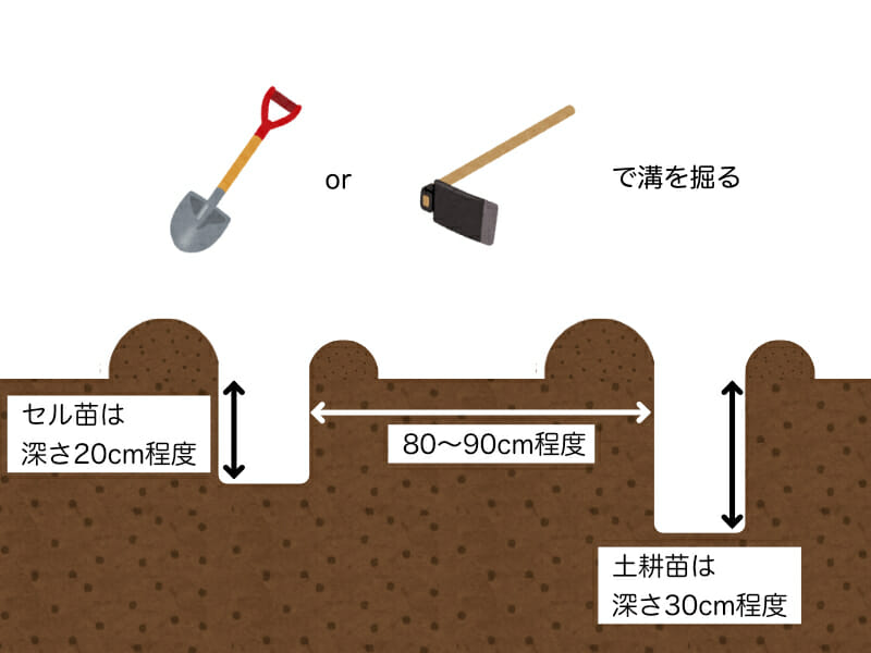根深ネギ(長ネギ)の植え溝の掘り方を示した画像です。深さはセル苗の場合20cm程度、土耕苗の場合30cm程度とし、スコップやクワで掘ります。溝と溝の間は80cm〜90cm程度あけます。