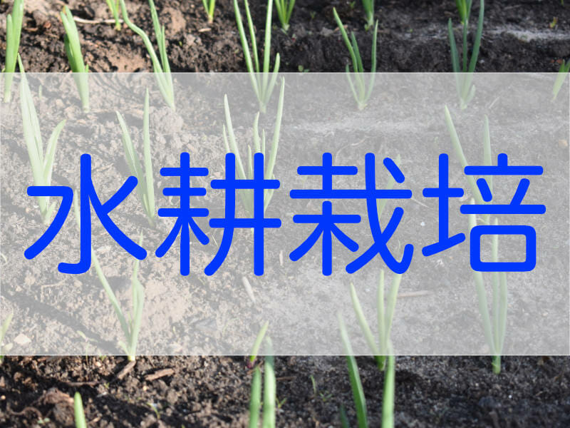 ネギの水耕栽培に関する記事のバナーです。