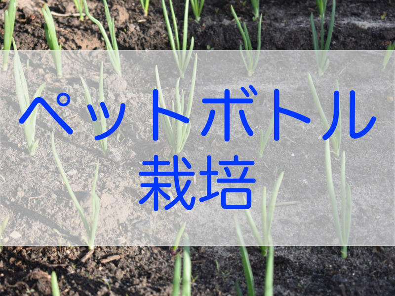 ネギのペットボトル水耕栽培に関する記事のバナーです。