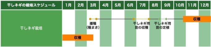 九条太ネギを使った干しネギ栽培の栽培スケジュールです。